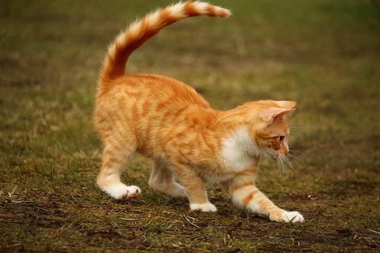 5 motive pentru care nu trebuie sa adopti pisici